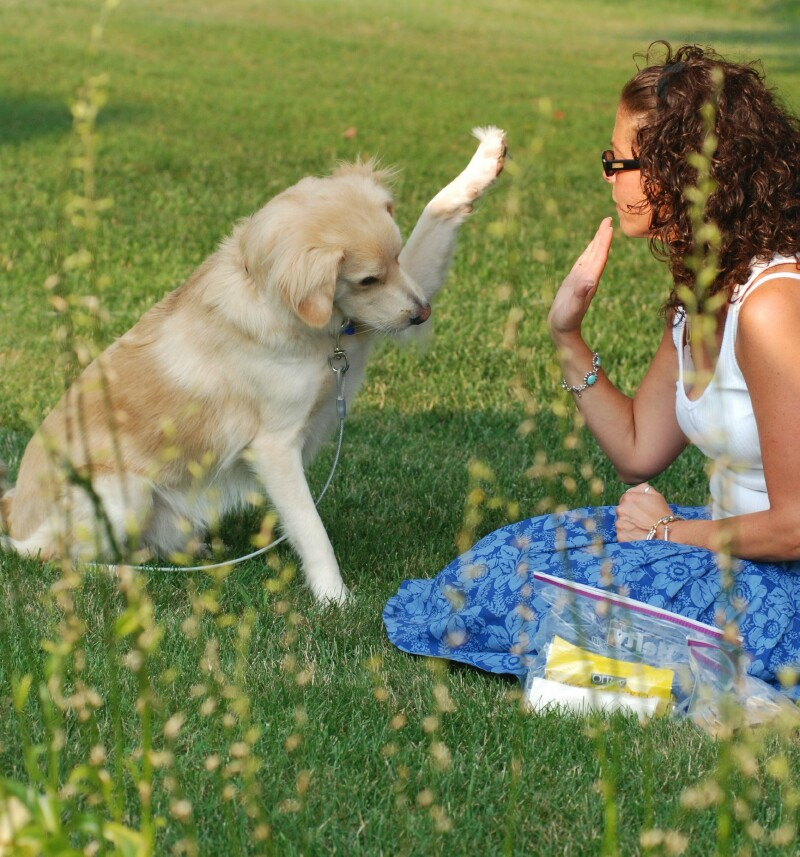 How To Choice Dog Treats For Training Your Dog