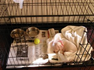 Crate Training Tips For Your Dog