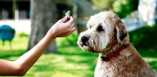 Mirror Method Dog Training