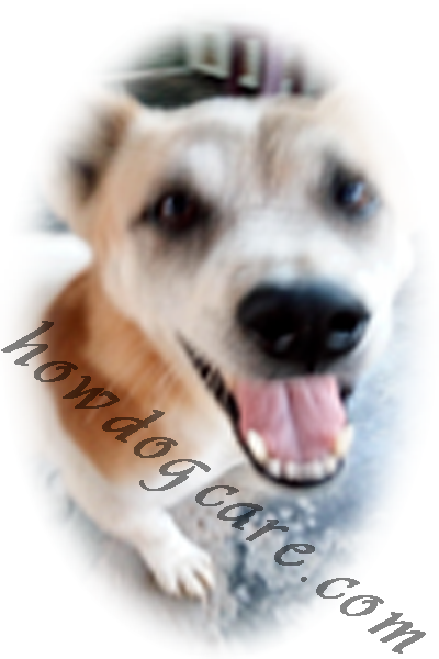 How to dog care - Best top care with dogs
