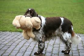 Dog Toys – The Good & The Bad