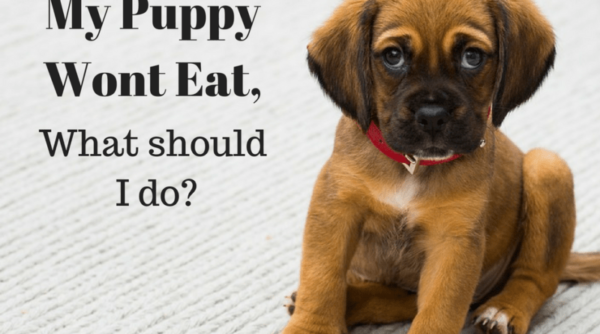 When Your Puppy Won't Eat!