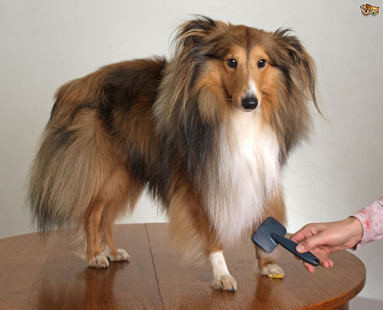 Groom a Dog with Matted Fur