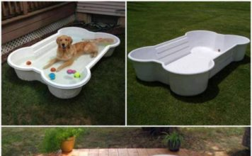 Dog Bone Shaped Pool for Your Dogs