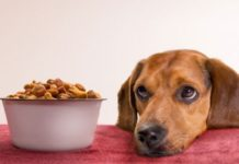 Your Dog Is Not Eating