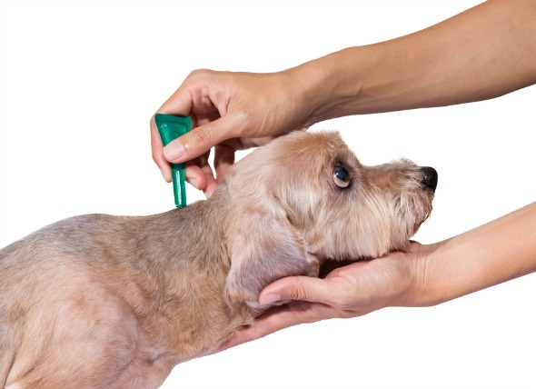 Best Flea Pill for Dogs