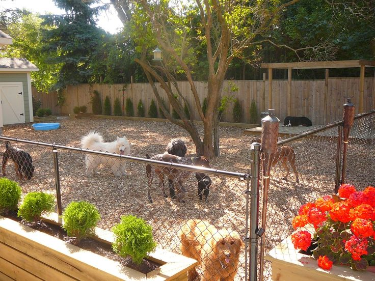 Dog Playpens Are A Must Have For Every Friendly Backyard Yard Ideas