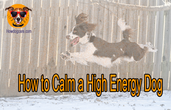 How to Calm a High Energy Dog