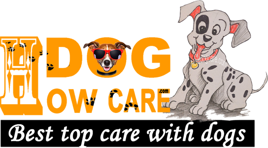 How To Dog Care Best Top Care With Dogs