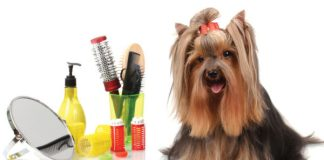 Dog Grooming Save You Money