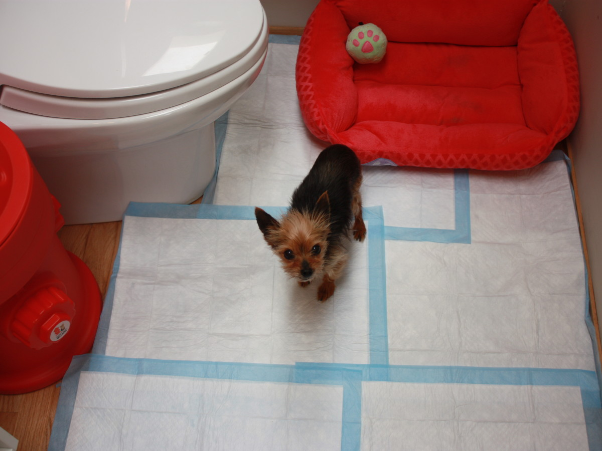 How To Train Older Dog To Use Puppy Pads