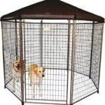 heavy duty dog crate