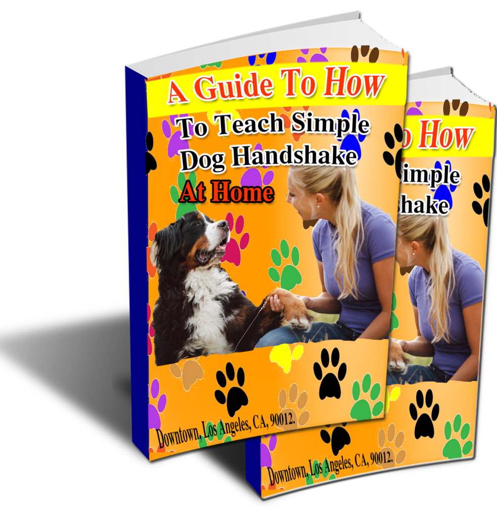 A Guide To How To Teach Simple Dog Handshake At Home