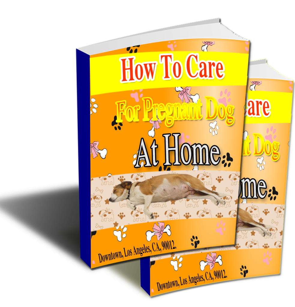 How To Care For Pregnant Dog At Home