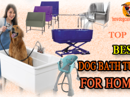best dog bath tub for home