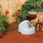 Best Automatic Dog Waterer Outdoor