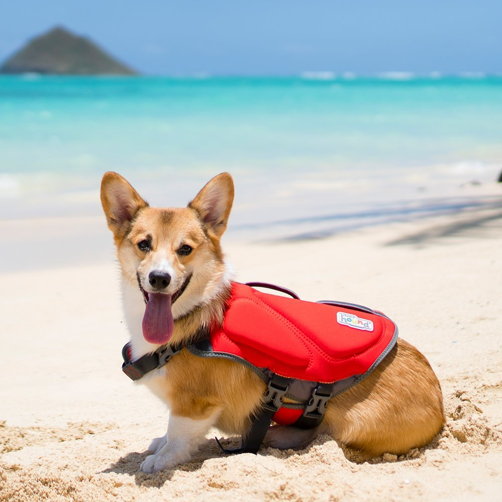 Best Small Dog Life Jacket 3 Best Top Care With Dogs