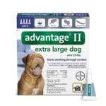 Best Flea Medicine For Dogs 3