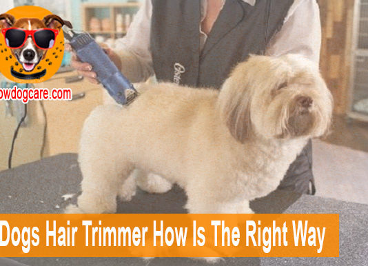 Use Dogs Hair Trimmer How Is The Right Way
