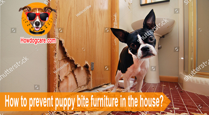 How to prevent puppy bite furniture in the house?