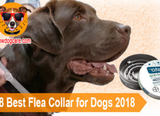 Top 8 Best Flea Collar for Dogs 2018