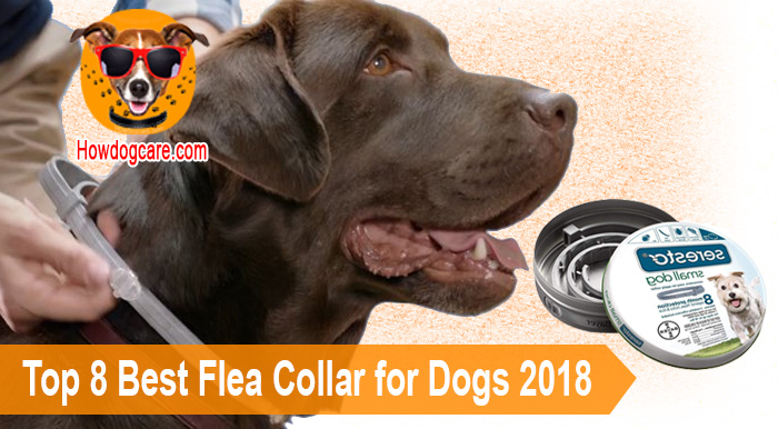 Top 8 Best Flea Collar for Dogs 2018