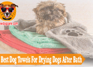 Top 10 Best Dog Towels For Drying Dogs After Bath