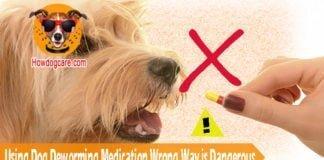 Using Dog Deworming Medication Wrong Way