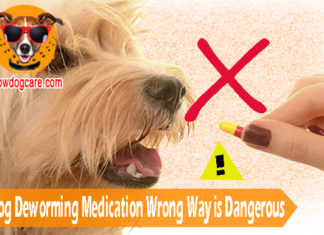 Using Dog Deworming Medication Wrong Way