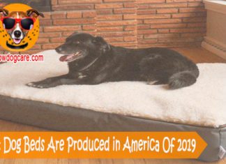 12 Best Dog Beds Are Produced in America Of 2019