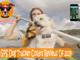 19 Best GPS Dog Tracker Collars Reviews Of 2019