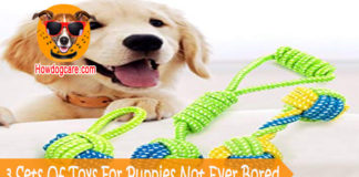 3 Sets Of Toys For Puppies Not Ever Bored