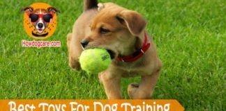Best Toys For Dog Training
