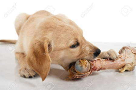 How To Calcium Supplements For Dogs?