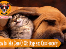 Share How To Take Care Of Old Dogs and Cats Properly