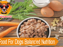 Wet Food For Dogs Balanced Nutrition