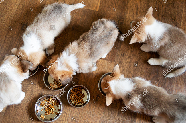 What Kind Of Dry Food For Puppies Is Good