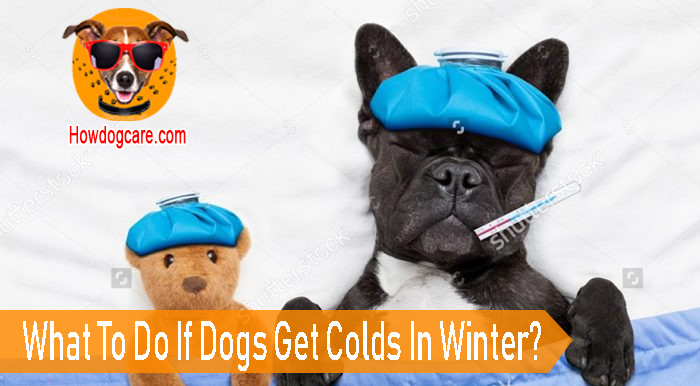 What To Do If Dogs Get Colds In Winter?