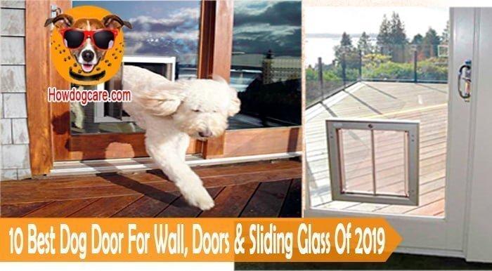 10 Best Dog Door For Wall, Doors & Sliding Glass Of 2019