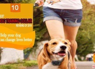 10 Best Dog Training Collar 2019 Reviews