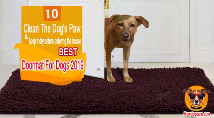 Best Doormat For Dogs To Cleaning Dirty Paws (2019)