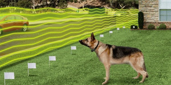 What Is Wireless Dog Fence?