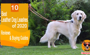 10 Best Leather Dog Leashes Reviews & Buying Guides 2020