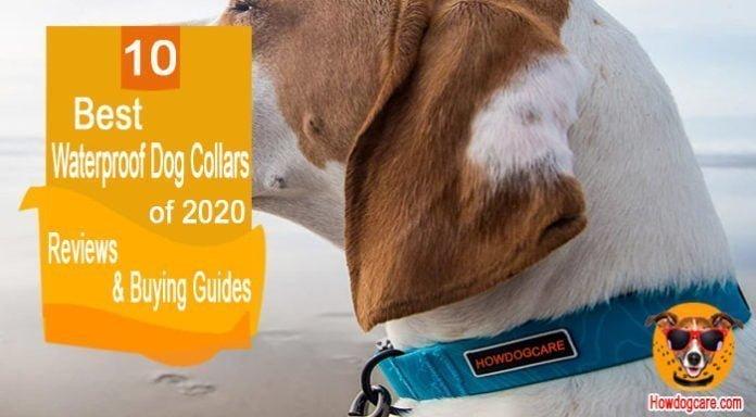 10 Best Waterproof Dog Collars Reviewed