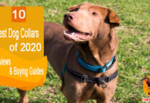 Top Ten Best Dog Collars Reviewed In 2020