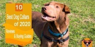 Top Ten Best Dog Collars Reviewed In 2020